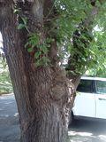 Squirrelnookie2