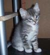Cats_040
