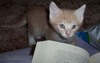 Cats_043
