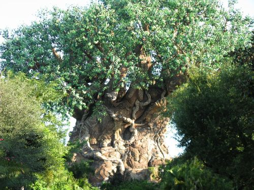 AnimalKingdom207