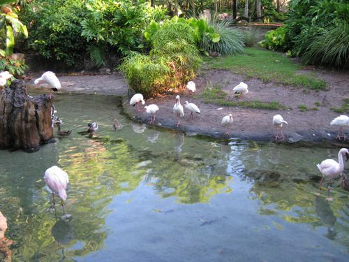 AnimalKingdom210