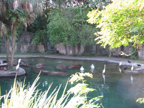 AnimalKingdom223