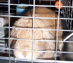 Bunnies_002