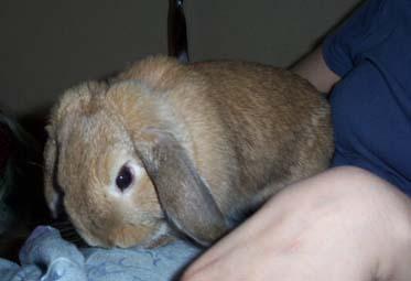 Bunnies_022
