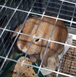 Bunnies_041