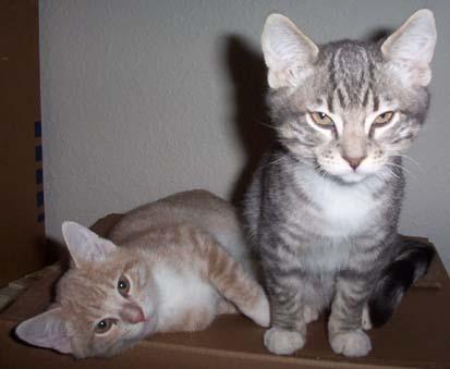 Cats_010_1
