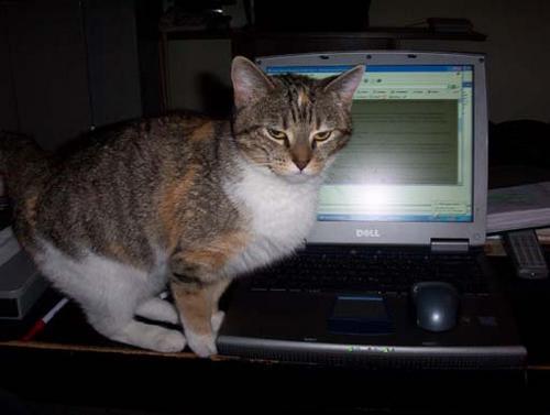 Humping_cat_003